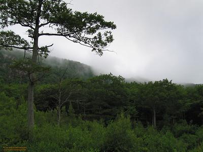 """Foggy Morn"" - Mount Desert Island"