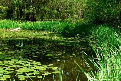 Kittery Pond