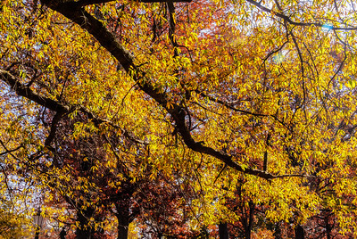 """Glistening Autumn"" on the grounds of the University of North Carolina Chapel Hill, North Carolina"