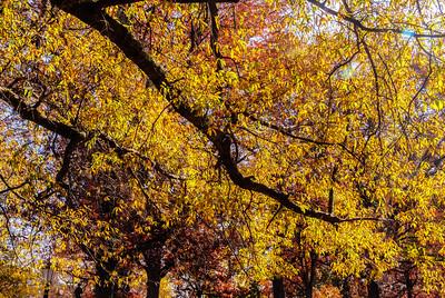 """Glistening Autumn"" on the grounds of the University of North Carolina Chapel Hill, North Carolina"