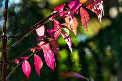 Blackburn Autumn 1