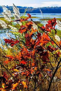 """Autumn Breeze"""
