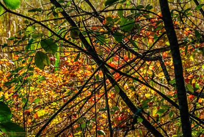 """""""Autumn Confetti"""""""
