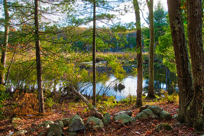 """""""Autumn - Cleveland Farms State Forest"""""""
