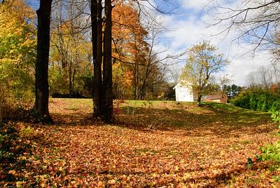 Autumn Backyeard