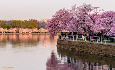 """""""Spring Morning Zen"""""""
