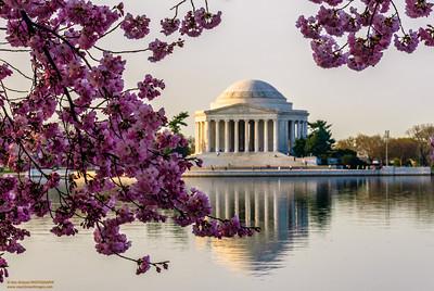 """Jeffersonian Spring Morning"""