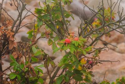 """A Fragile Plant Weathering Hurricane Sandy"""