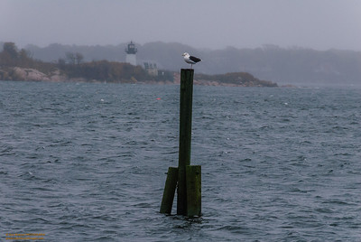 """Watching the Storm"" - Hurricane Sandy, Gloucester Harbor, Gloucester, Massachusetts"