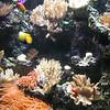 Shedd Aquarium - Chicago