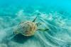 TurtleGetaway
