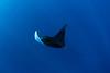 Manta Flight