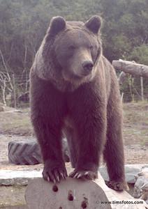 Bear Donnacha