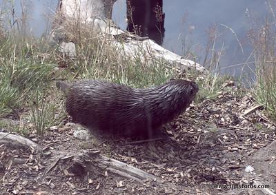 Otter Uisce