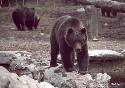 The 3 bears