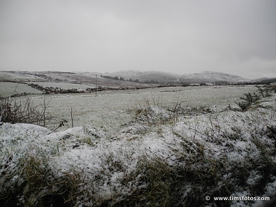 Snowy Donegal