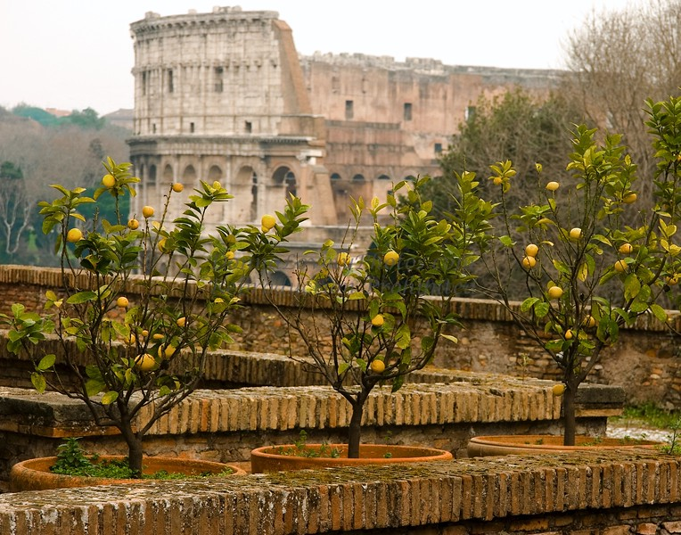 Roman Lemons and Colosseum, Italy