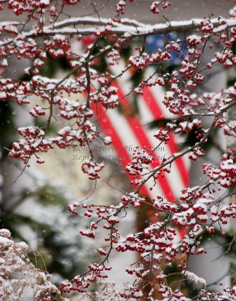 Snowy Berries and Flag