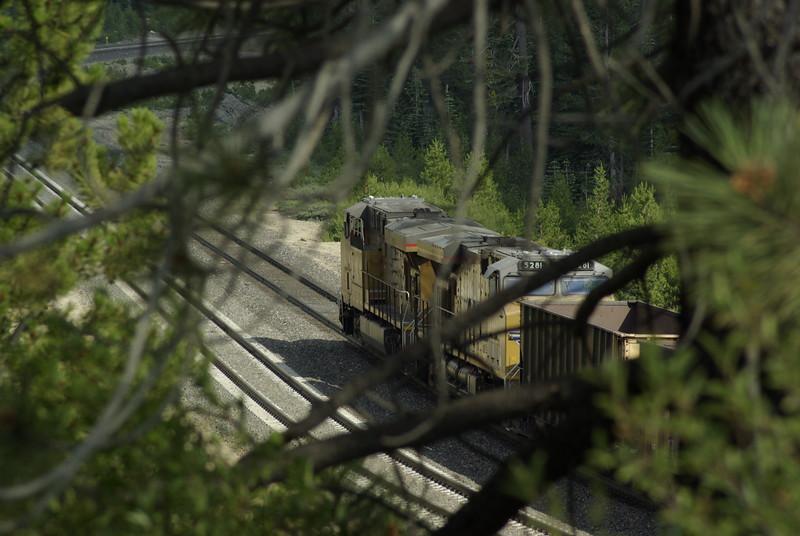 Train Through the Trees, Norden, CA