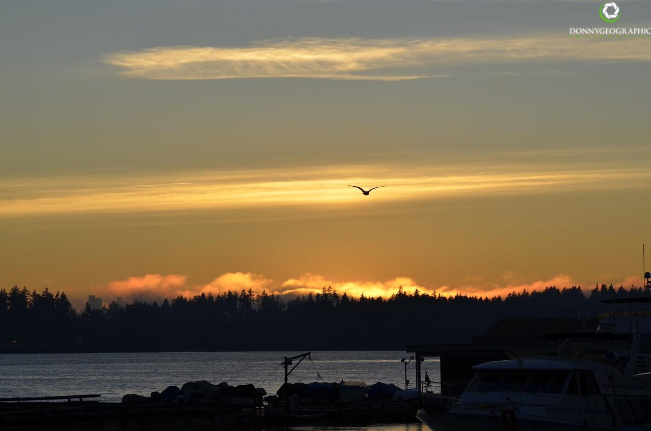 Gil thru the sunset
