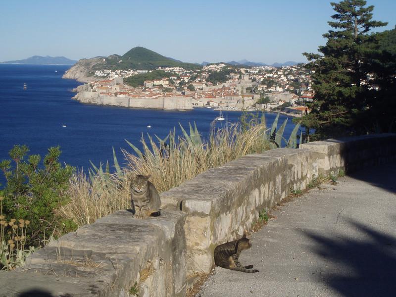 Taken on an early morning run outside Dubrovnik