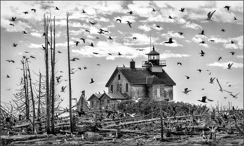 Bird Frenzy at Pilot Island