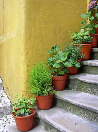 Yellow wall & potted plants, Evora, Portugal