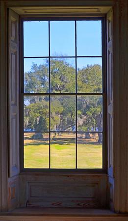drayton window tree