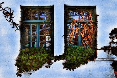 Venice Beach Windows