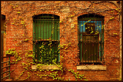 2 Alleyway Windows Pasadena CA