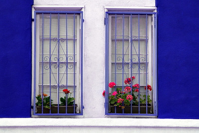Riverside CA Windows and Flowers
