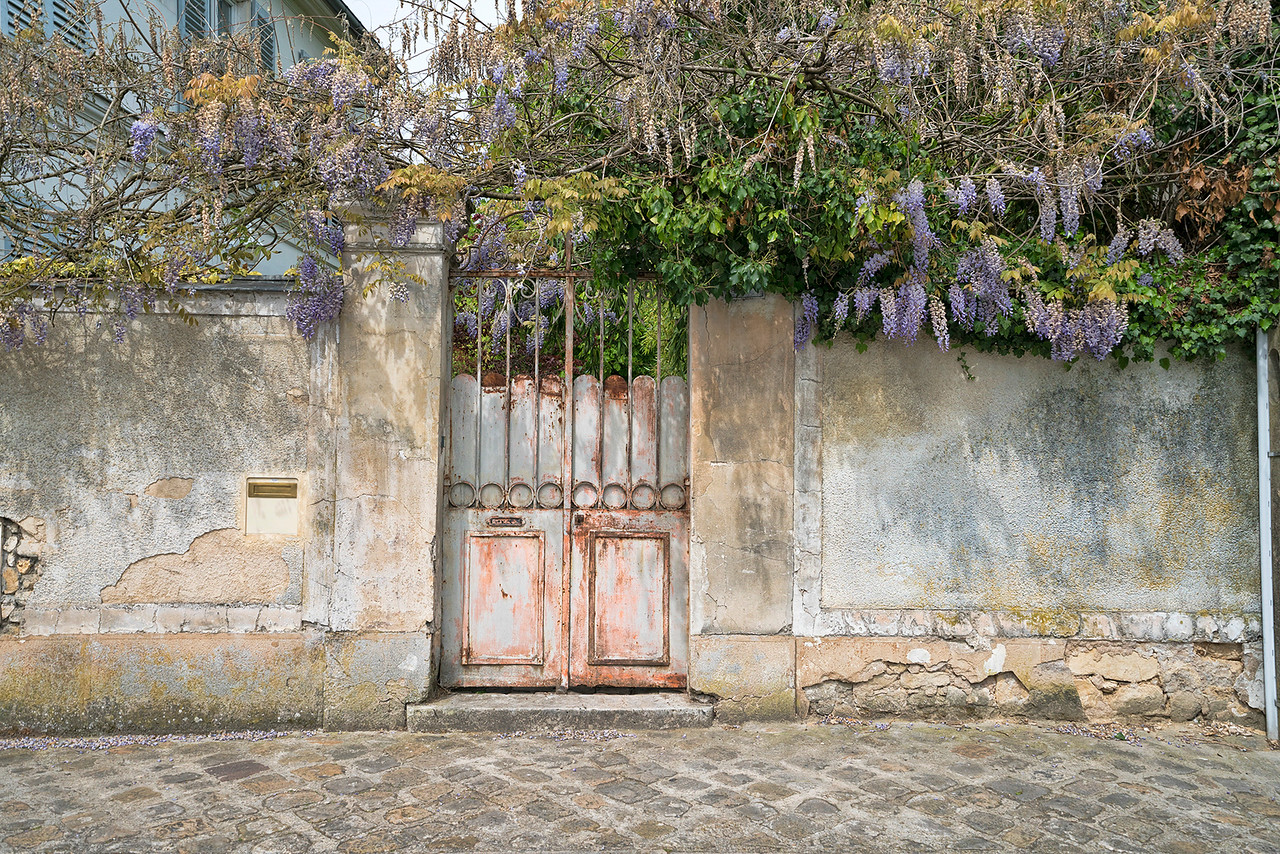 Wisteria Draped Wall and Gate