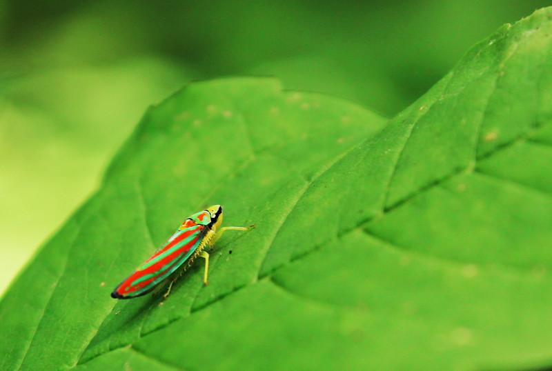 "In a New Light: Dooskaabi - Jack - ""Beautiful Bug"""