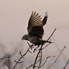 """Flying Bird"" by Brent, 16 | Dooskaabi"