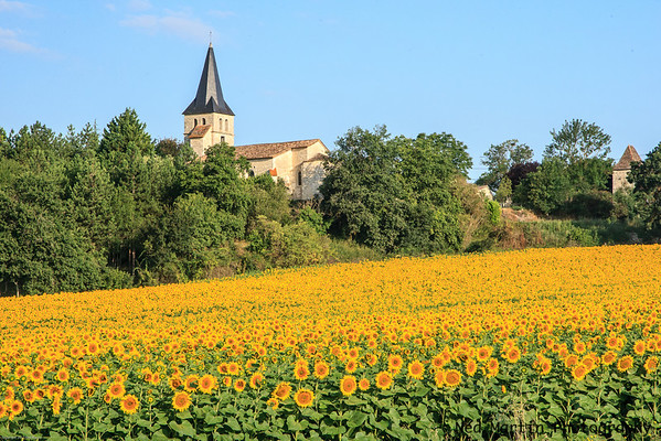 Sunflowers and Church at Lubersac in Perigeux, France
