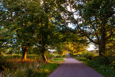 Country lane in Dorset