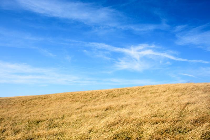 Grassland in the Purbeck Hills