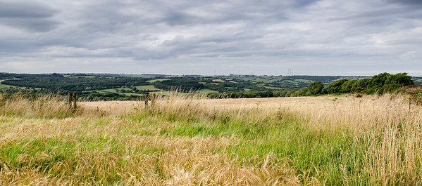 Rolling Dorset landscape from Eggardon Hill