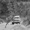 saut-chevreuil-camion-anticosti