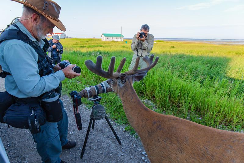 safari-photo-anticosti-paradoxe