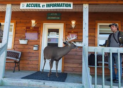 sepaq-accueil-information-chevreuil
