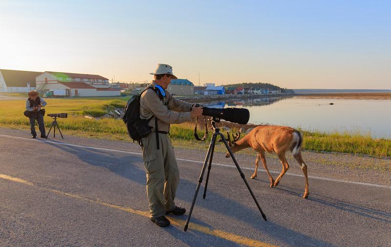 safari-photo-anticosti