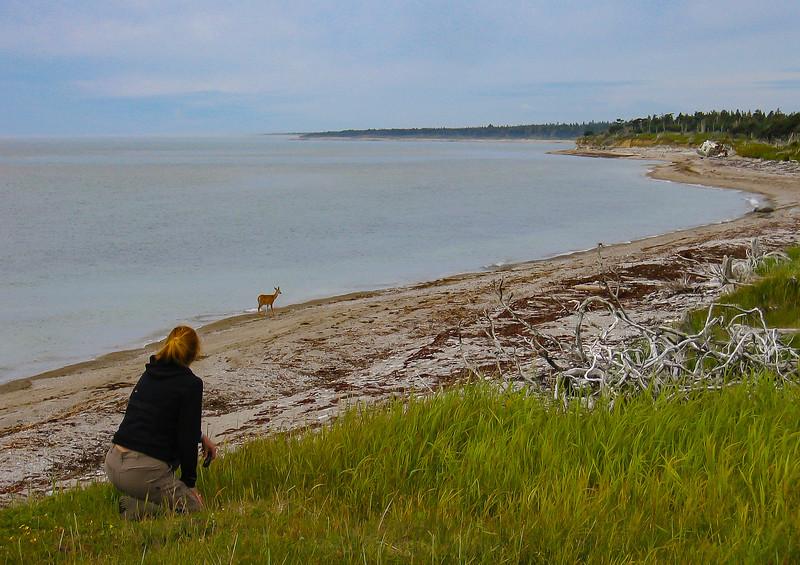 femme-chevreuil-plage-martin-mer-anticosti