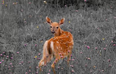 Fleurs et faon
