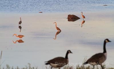 anticosti faune, René Bourque Photos