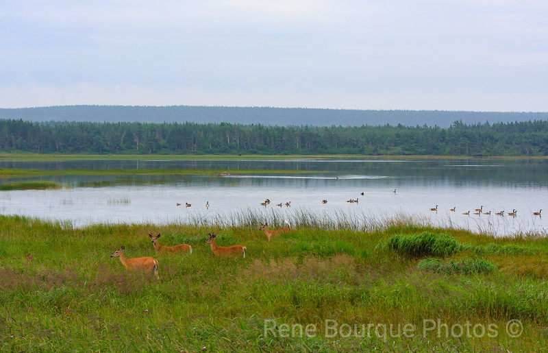 Lac / Lake Georges, Port-Menier
