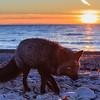 coucher-soleil-renard-anticosti