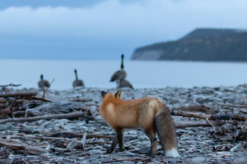 outardes-renard-mer-anticosti