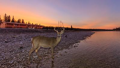 Our pet deer in front of Jupiter 12 on October 14th
