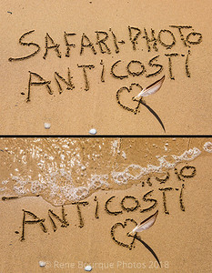 Logo-Safari Photo-Anticosti  2018